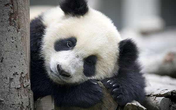 Обновление алгоритма Панда от Гугл